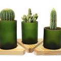 Timbre Store – Decoración sustentable