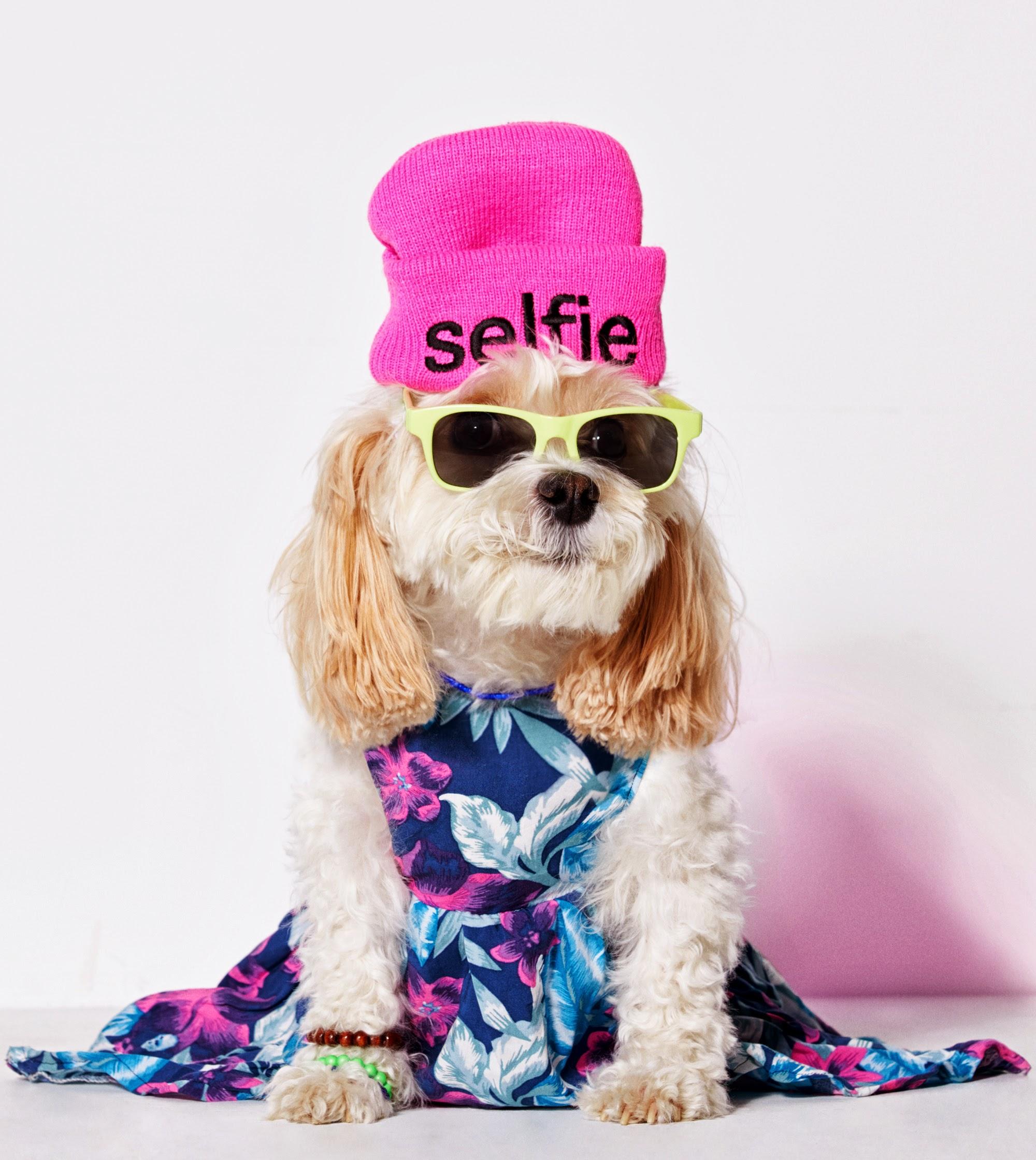 American Beagle Outfitters, la línea de ropa para perros que comenzó como una broma