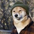 mensweardog5