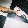 Insecta_Brasil1
