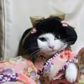 #KimonoCat