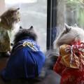 #KimonoCat12