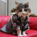 #KimonoCat13