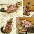 #KimonoCat3