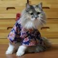 #KimonoCat5