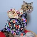 #KimonoCat6