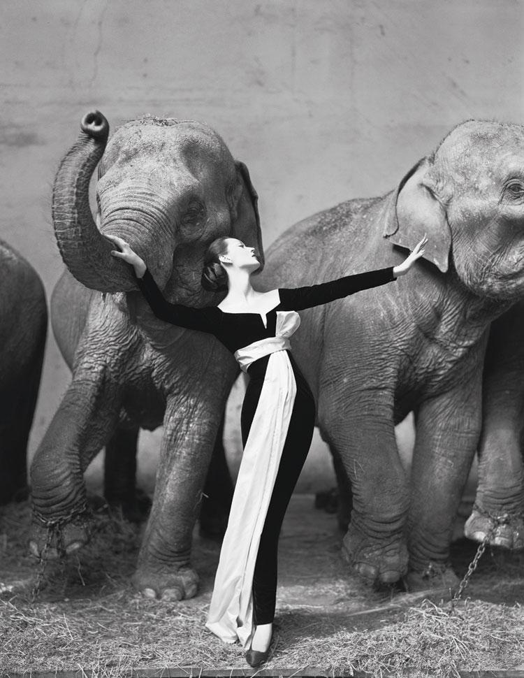 1955 dovima con elefantes acedon