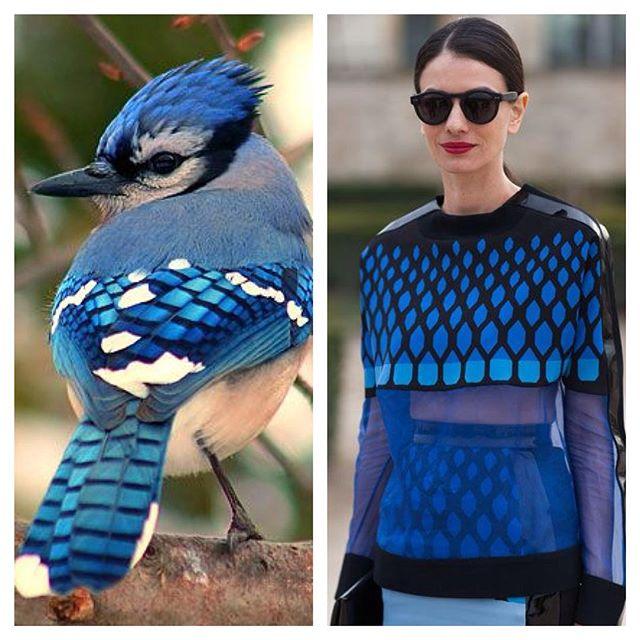 Fashionature