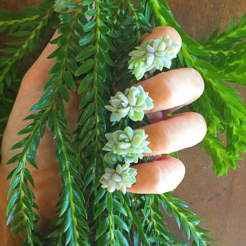 102616-succulent-nails-lead