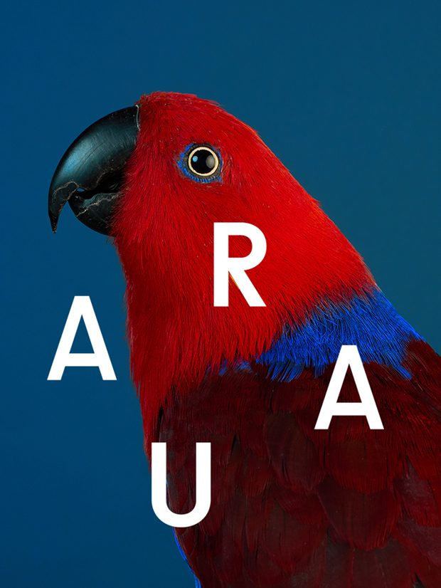 Parrot-aura-copy-620x826