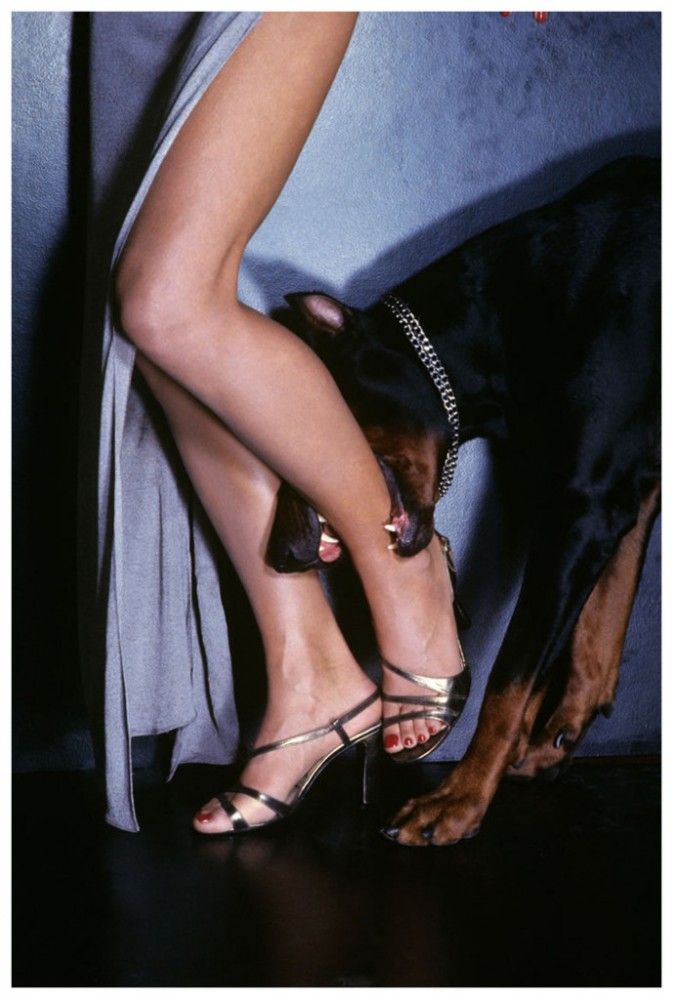 doberman-biting-the-leg-of-model-christie-brinkley-that-wears-a-metallic-high-heeled-sandal-by-geoffrey-beene-mention-condc3a9-nast-photo-by-chris-von-wangenheim-690x1024